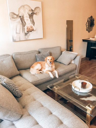 Top 3 Dog Friendly Apartments In Houston