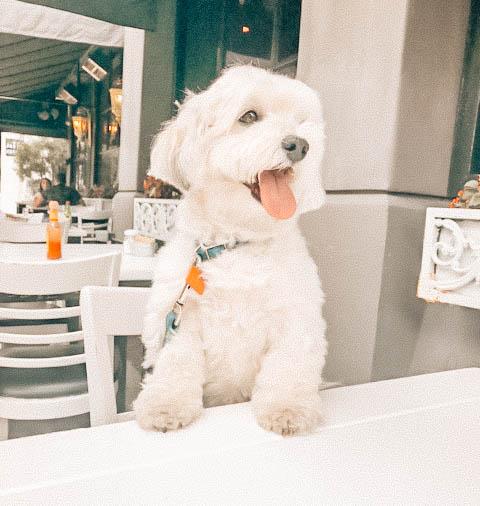 5 Dog Friendly Bars & Restaurants In Houston