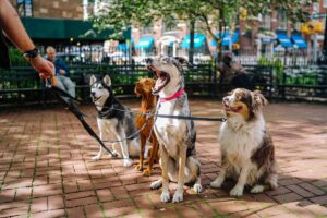 Dogs on leash on walk in Midtown Park
